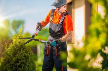 North Richland Hills Tree Service
